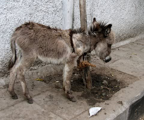 donkey outside Vivekananda College